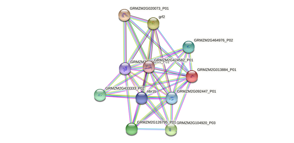 GRMZM2G013884_P01 protein (Zea mays) - STRING interaction network
