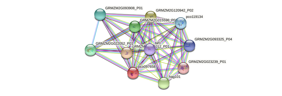 pco097658 protein (Zea mays) - STRING interaction network