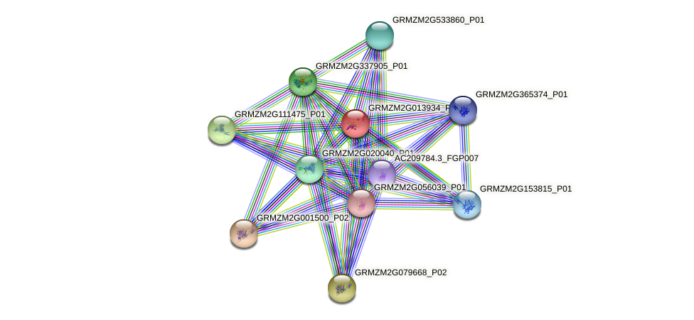 GRMZM2G013934_P01 protein (Zea mays) - STRING interaction network