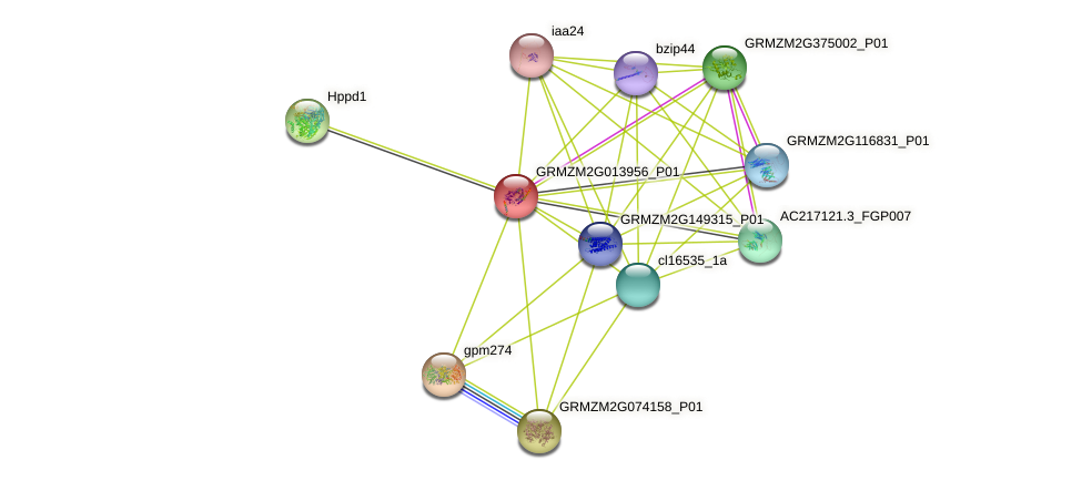 GRMZM2G013956_P01 protein (Zea mays) - STRING interaction network