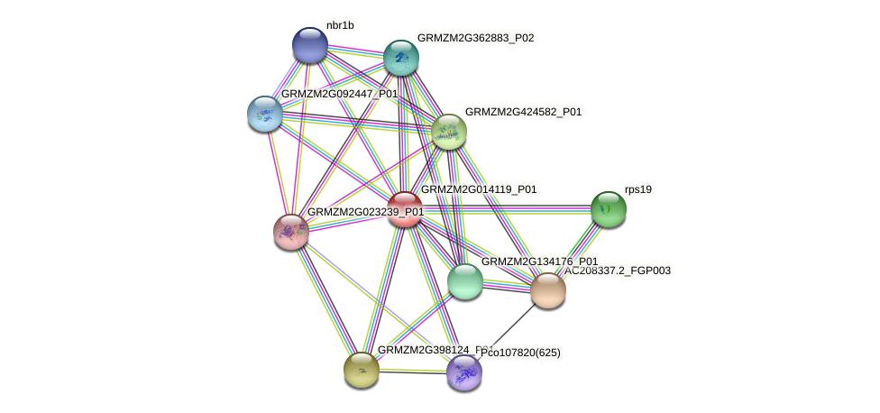 GRMZM2G014119_P01 protein (Zea mays) - STRING interaction network