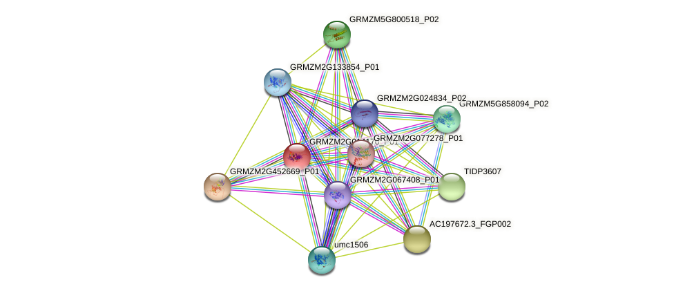GRMZM2G014170_P01 protein (Zea mays) - STRING interaction network