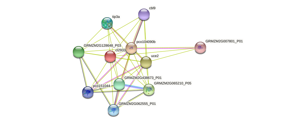 cl29332_1 protein (Zea mays) - STRING interaction network