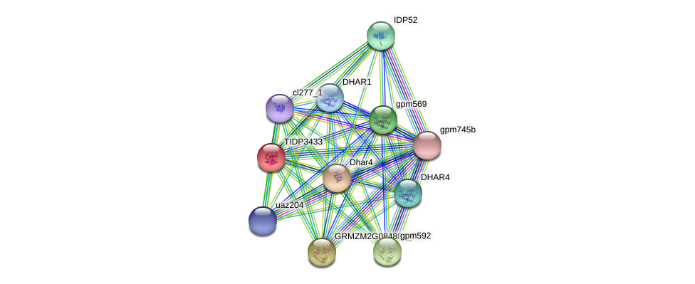 TIDP3433 protein (Zea mays) - STRING interaction network