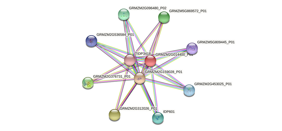Zm.155834 protein (Zea mays) - STRING interaction network