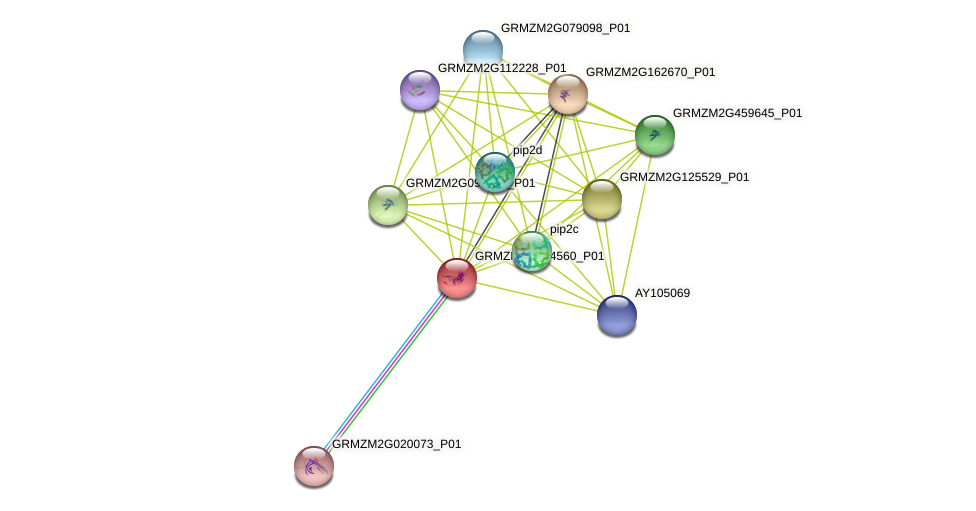 GRMZM2G014560_P01 protein (Zea mays) - STRING interaction network