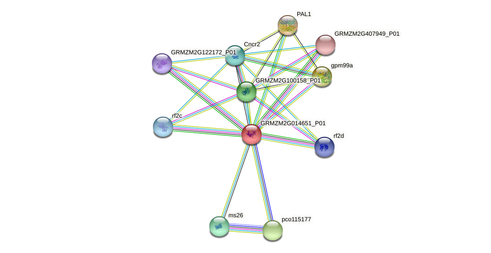 GRMZM2G014651_P01 protein (Zea mays) - STRING interaction network
