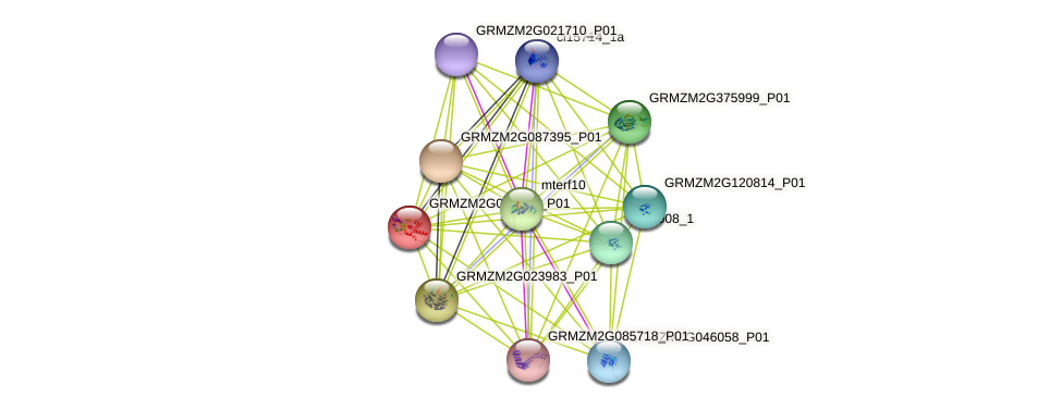 GRMZM2G014709_P01 protein (Zea mays) - STRING interaction network