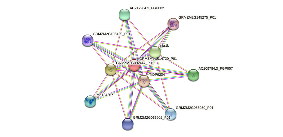 GRMZM2G014720_P01 protein (Zea mays) - STRING interaction network