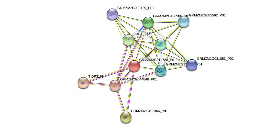 GRMZM2G014788_P01 protein (Zea mays) - STRING interaction network
