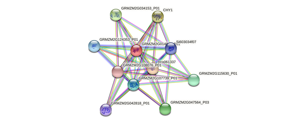 GRMZM2G014813_P01 protein (Zea mays) - STRING interaction network