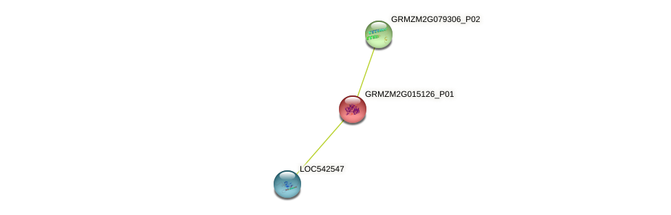 GRMZM2G015126_P01 protein (Zea mays) - STRING interaction network