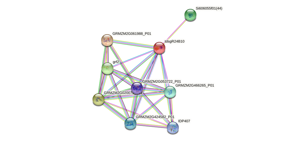 GRMZM2G015136_P01 protein (Zea mays) - STRING interaction network