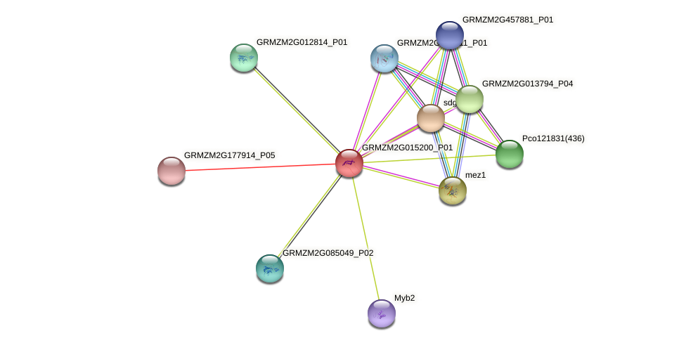 GRMZM2G015200_P01 protein (Zea mays) - STRING interaction network