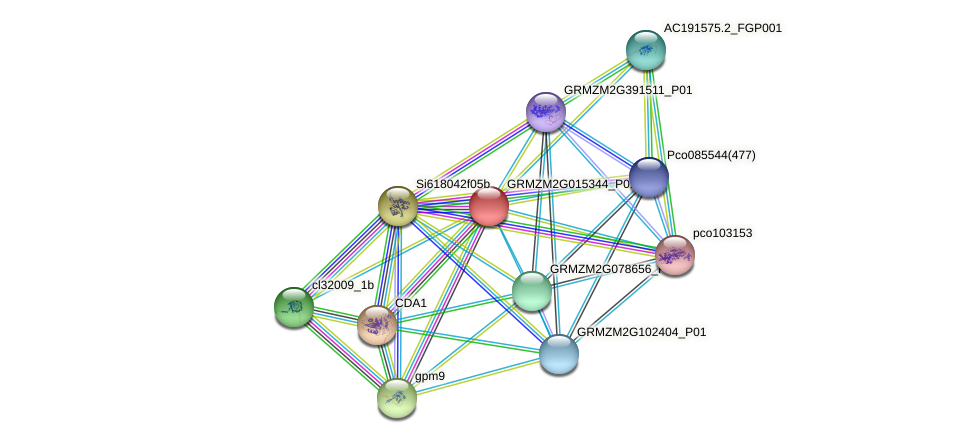 Zm.96384 protein (Zea mays) - STRING interaction network
