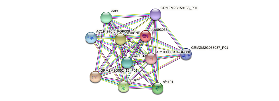 pco093035 protein (Zea mays) - STRING interaction network