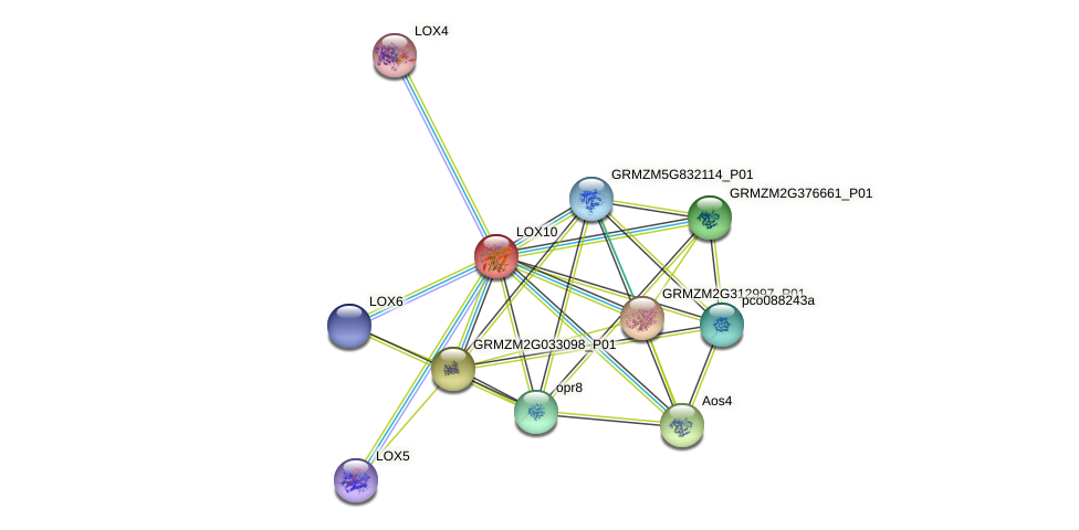 LOX10 protein (Zea mays) - STRING interaction network