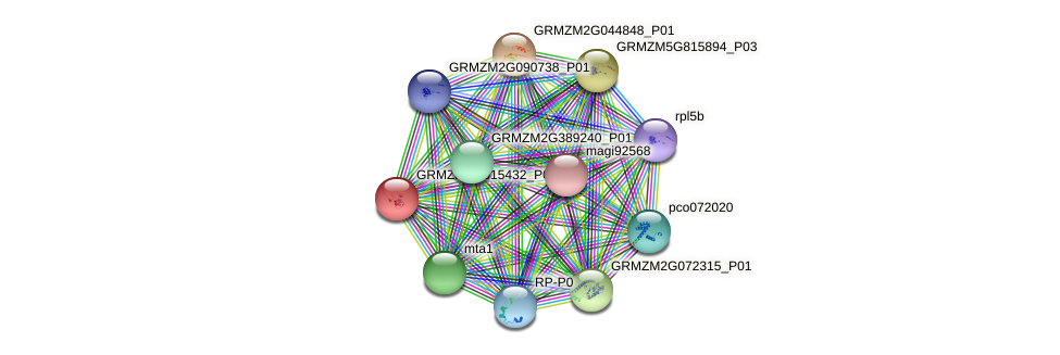 GRMZM2G015432_P04 protein (Zea mays) - STRING interaction network