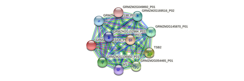 GRMZM2G015436_P02 protein (Zea mays) - STRING interaction network