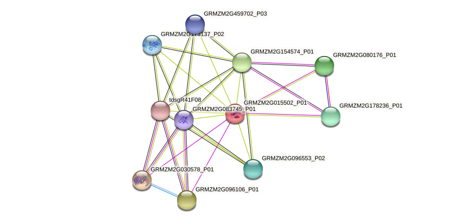 Zm.20784 protein (Zea mays) - STRING interaction network