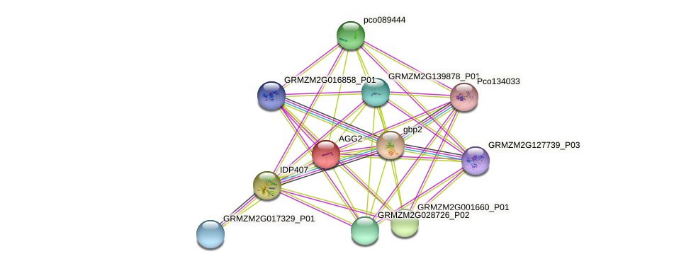AGG2 protein (Zea mays) - STRING interaction network