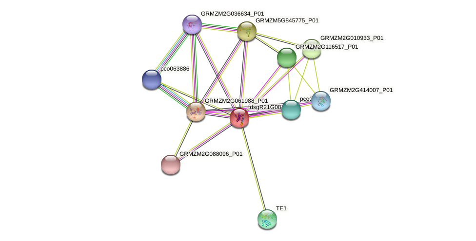 GRMZM2G015648_P01 protein (Zea mays) - STRING interaction network