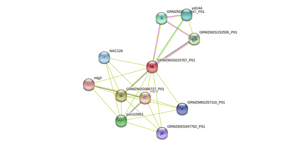 GRMZM2G015767_P01 protein (Zea mays) - STRING interaction network