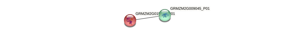 GRMZM2G015844_P01 protein (Zea mays) - STRING interaction network