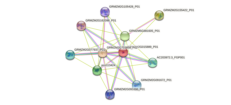 GRMZM2G015889_P01 protein (Zea mays) - STRING interaction network