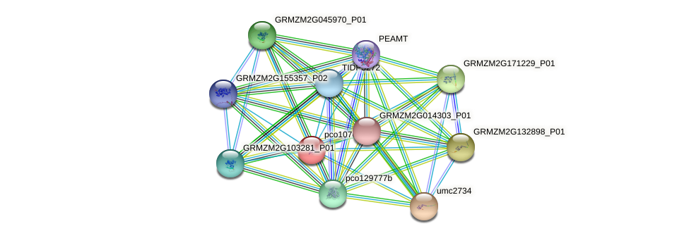 pco107612 protein (Zea mays) - STRING interaction network