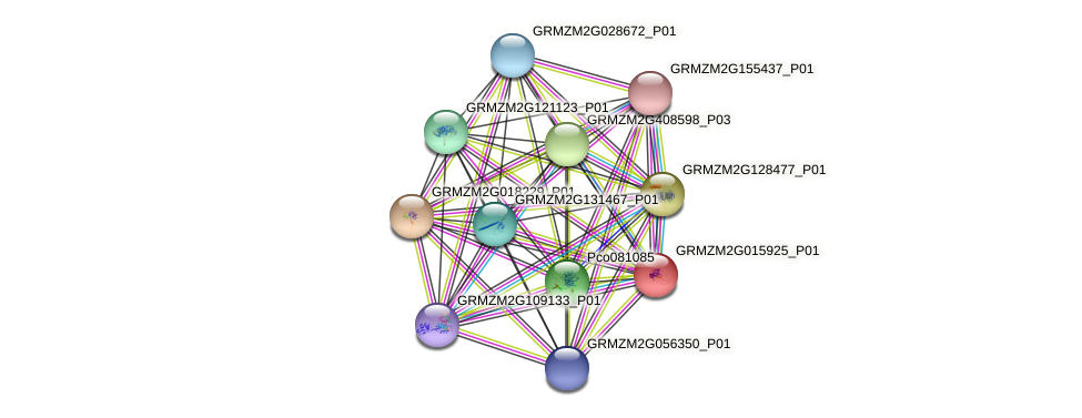 GRMZM2G015925_P01 protein (Zea mays) - STRING interaction network