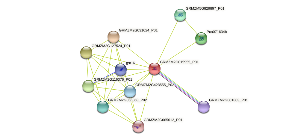 Zm.21545 protein (Zea mays) - STRING interaction network