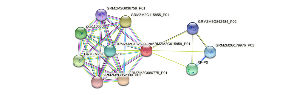 GRMZM2G015959_P01 protein (Zea mays) - STRING interaction network