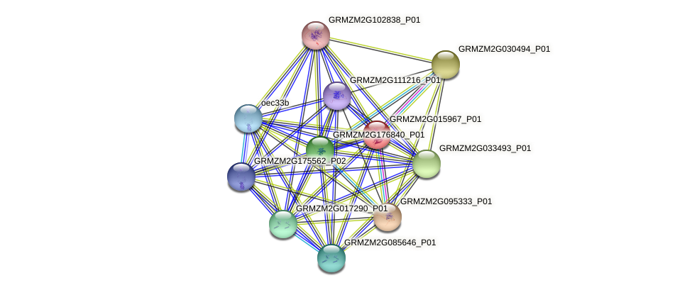 GRMZM2G015967_P01 protein (Zea mays) - STRING interaction network