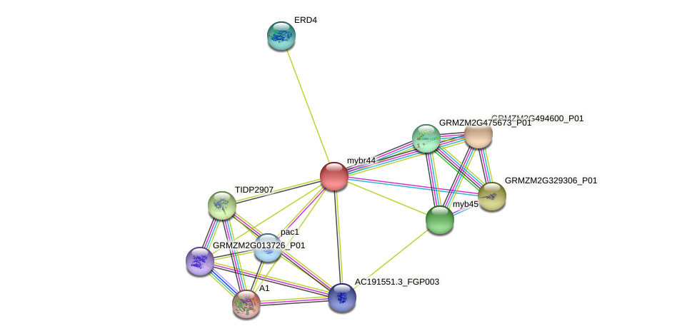 mybr44 protein (Zea mays) - STRING interaction network