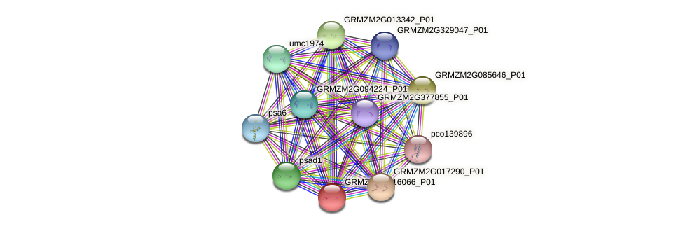 GRMZM2G016066_P01 protein (Zea mays) - STRING interaction network