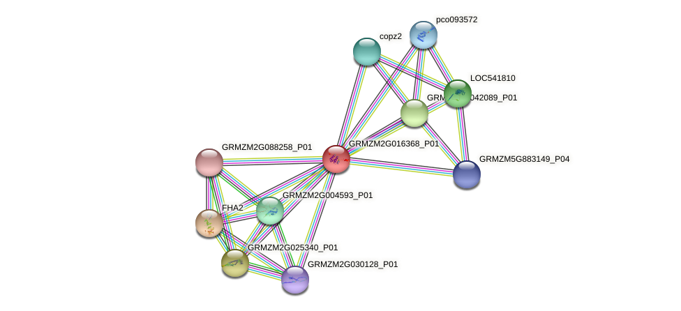 GRMZM2G016368_P01 protein (Zea mays) - STRING interaction network