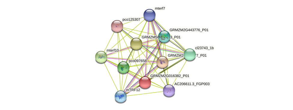 GRMZM2G016382_P01 protein (Zea mays) - STRING interaction network