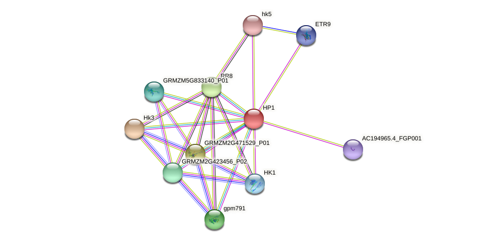 HP1 protein (Zea mays) - STRING interaction network