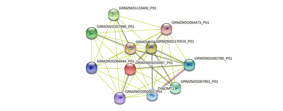 GRMZM2G016457_P01 protein (Zea mays) - STRING interaction network