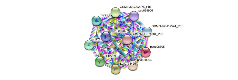 pco108605 protein (Zea mays) - STRING interaction network