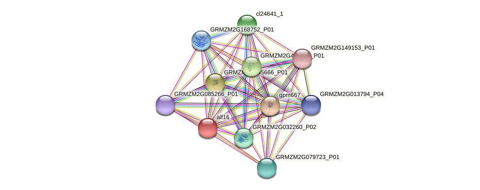 alf16 protein (Zea mays) - STRING interaction network