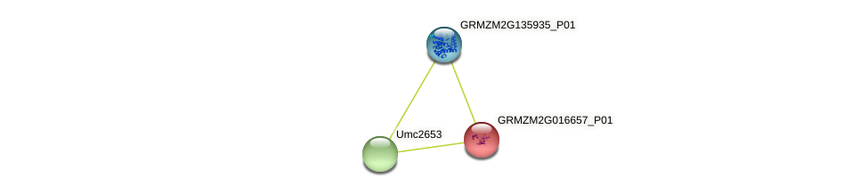 GRMZM2G016657_P01 protein (Zea mays) - STRING interaction network