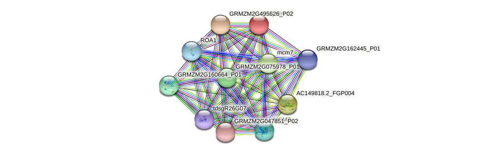 GRMZM2G017081_P01 protein (Zea mays) - STRING interaction network