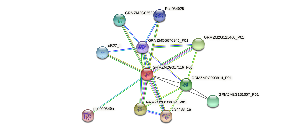 GRMZM2G017116_P01 protein (Zea mays) - STRING interaction network
