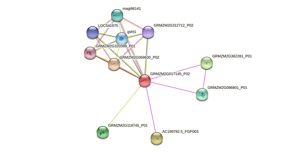 Zm.86044 protein (Zea mays) - STRING interaction network