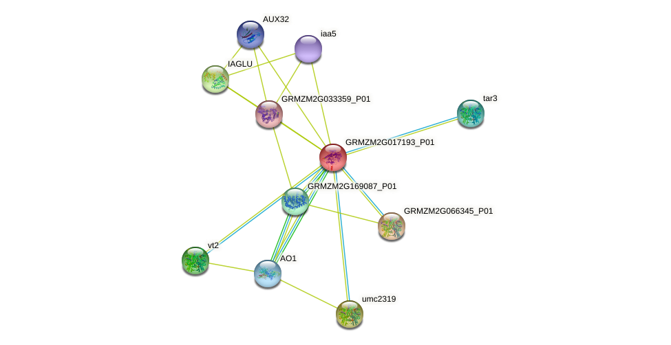 GRMZM2G017193_P01 protein (Zea mays) - STRING interaction network