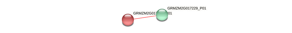 GRMZM2G017249_P01 protein (Zea mays) - STRING interaction network