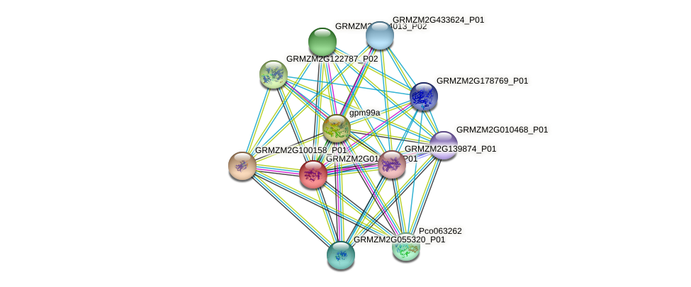 Zm.158615 protein (Zea mays) - STRING interaction network