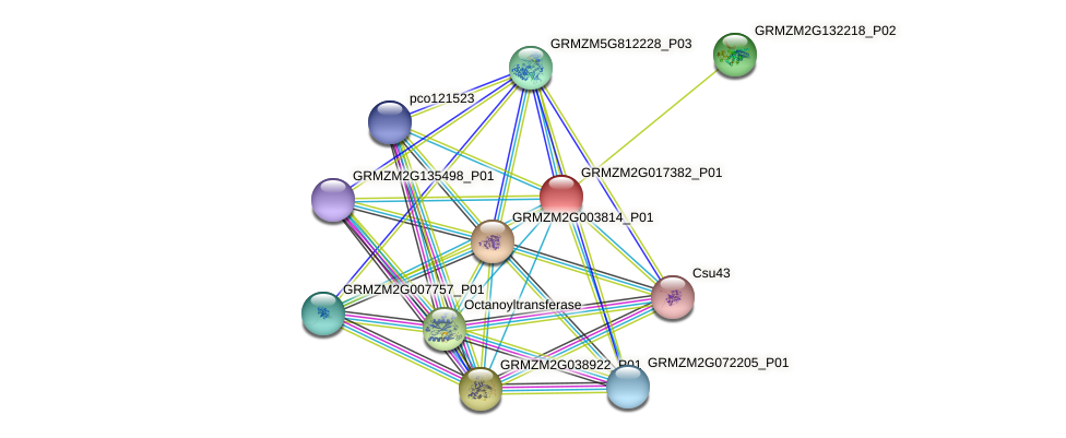 100284647 protein (Zea mays) - STRING interaction network